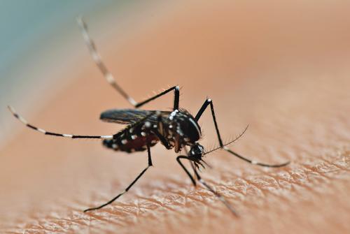 Zika Virus – Mosquito Borne Disease