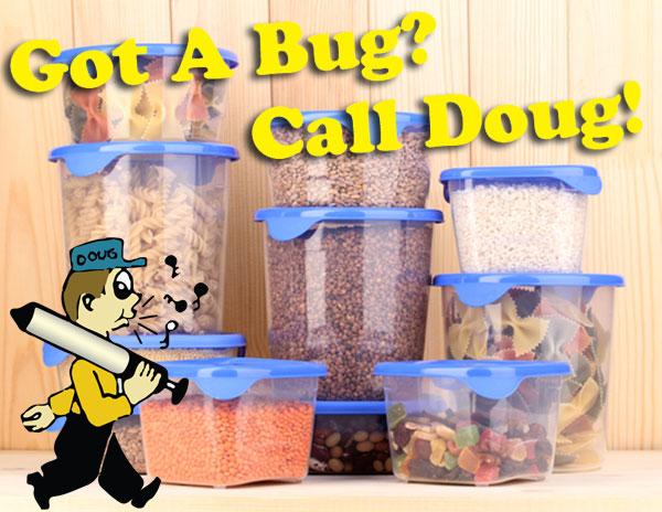 Keeping Your Kitchen Pest Free