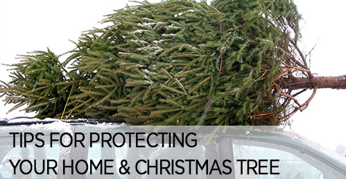 Protecting Your Christmas Tree & Home From Unwanted Pests