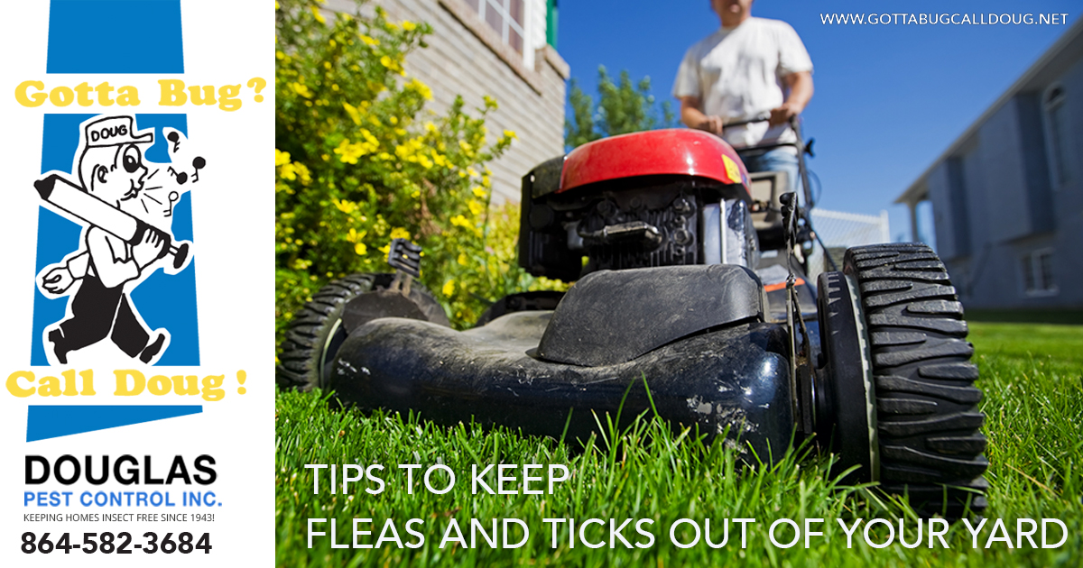 Tips To Keep Fleas and Ticks Out Of Your Yard