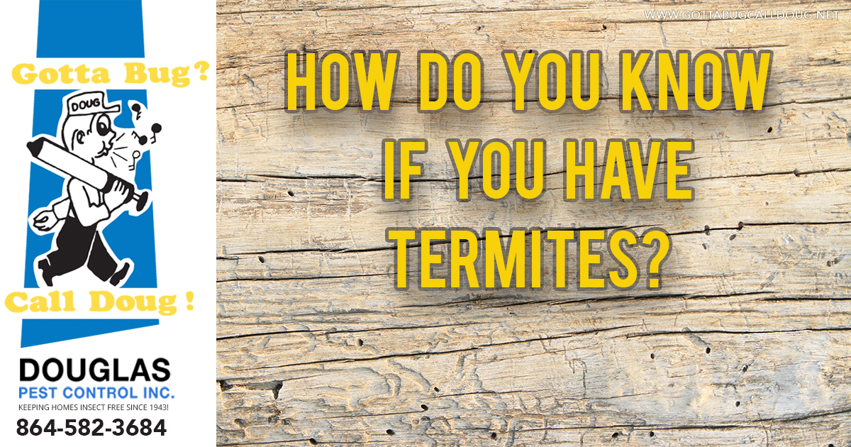 How Do You Know If You Have Termites?