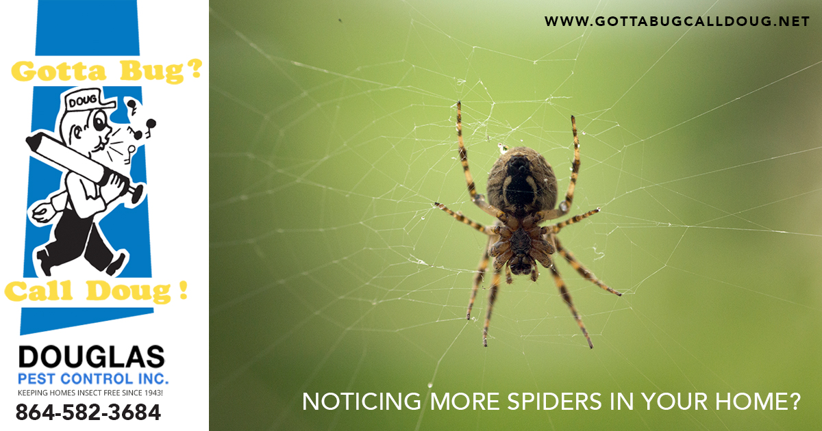 Spiders In Your Home?