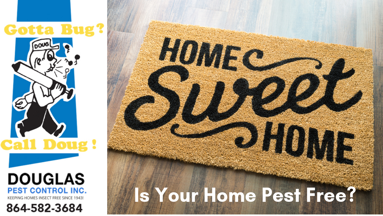 Is Your Home Pest Free? Contact Your Spartanburg Exterminator