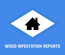 Wood Infestation Reports
